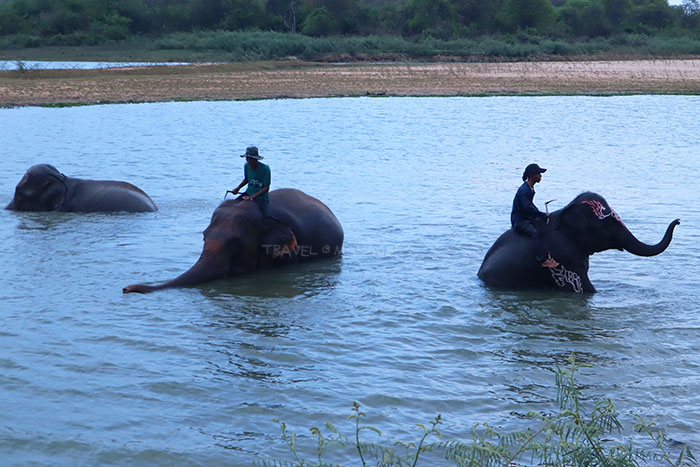 """สัมผัสความน่ารักแสนรู้ของช้างที่ """"ศูนย์คชศึกษา"""" หมู่บ้านช้างเลี้ยงที่ใหญ่ที่สุดในโลก"""