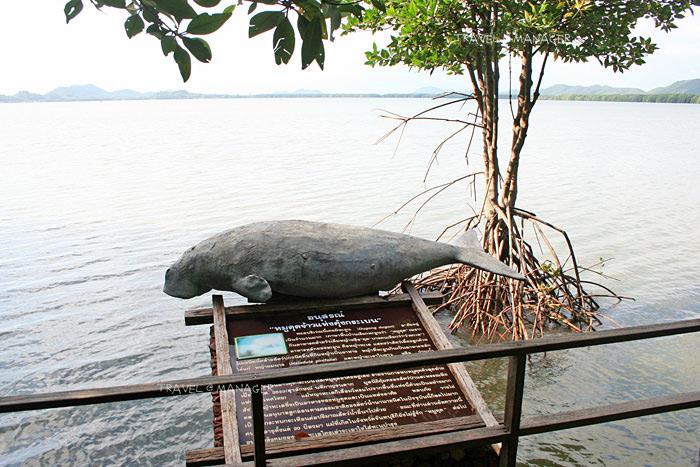 รูปปั้นหมูดุดที่มีให้ดูต่างหน้าหลังหายไปจากทะเลอ่าวคุ้งกระเบน