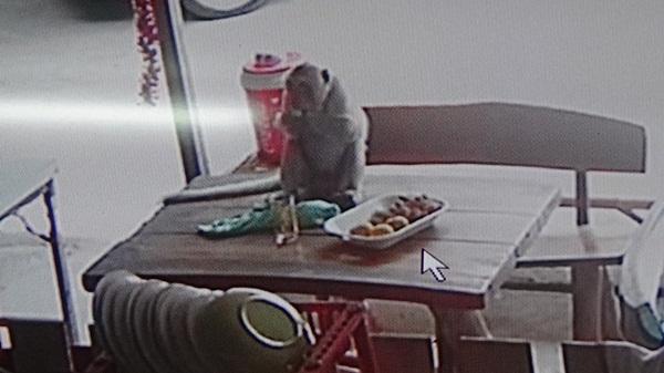 """ฮากลิ้ง """"ลิงกัง""""ย่องมาขโมยของในครัว ..เจ้าของคิดว่าเป็นสิ่งลี้ลับลงทุนซื้อกล้องวงจรปิดจับภาพ"""