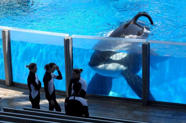 """นักอนุรักษ์เฮ! แคนาดาผ่านกฎหมายห้ามจับ-เพาะพันธุ์ """"วาฬ-โลมา"""""""