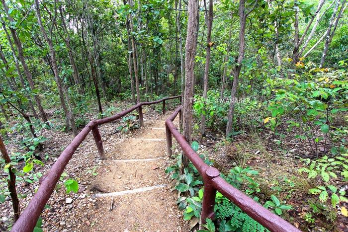 ทางเดินขึ้น-ลง ผ่านป่าโปร่งสู่ผาช่อ