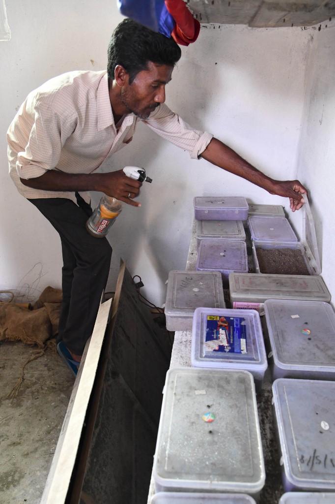 ปรานับ มาลาการ์ ฉีดพ่นละอองน้ำในกล่องที่บรรจุไข่และตะพาบ ซึ่งเก็บขึ้นจากตลิ่งริมบึง (Biju BORO / AFP)