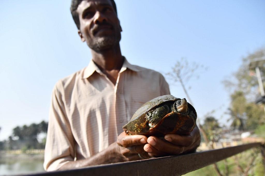 ปรานับ มาลาการ์ อุ้มเต่าที่อยู่ริมบึง (Biju BORO / AFP)