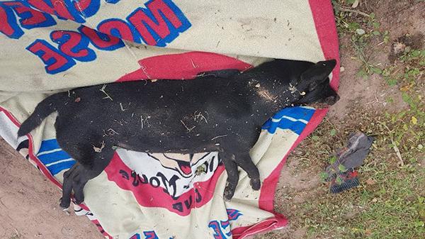 สาวใหญ่เศร้าใจ สุนัขที่เลี้ยงไว้ถูกคนใจร้ายวางยาเบื่อ ตายไปแล้ว 13 ตัว