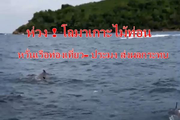 หวั่น ! ไม่มีโลมาให้ดู หลังพบเรือท่องเที่ยว- ประมงเสี่ยงทำอันตราย จี้รัฐดูแลด่วน