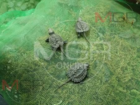 จับคาด่านห้วยหินฝน!รถตู้ขนแรงงานพม่าลอบขนปลาสวยงาม-ลูกเต่าต้องห้ามตามบัญชีไซเตสเกือบ 5 พันตัว