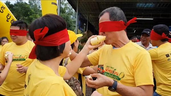 อุบลฯจัดแรลลี่พาชมสวนกินข้าวป่า แข่งปิดตากินทุเรียนภูเขาไฟ