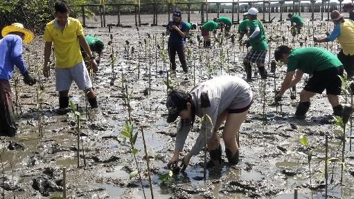 ไทยเบฟฯ รวมพลังจิตอาสาปลูกป่าชายเลนอนุรักษ์วิถีชาวประมงน้ำตื้นชุมชนนางสระเก้าจันทบุรี