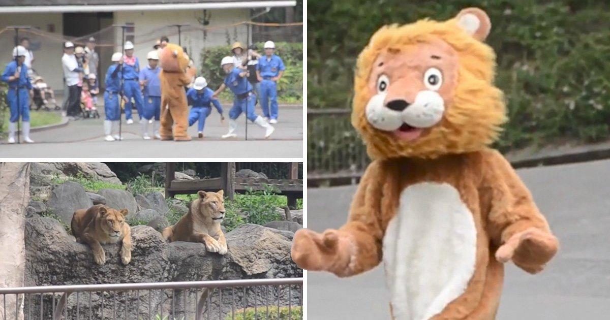 น่ารักสไตล์ญี่ปุ่น! สวนสัตว์แดนปลาดิบทำการฝึกซ้อมรับมือสิงโตหลุดจากกรง