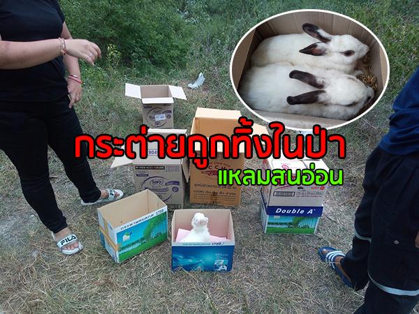อึ้ง! พบกระต่ายถูกนำมาทิ้งในป่าแหลมสนอ่อน นศ.สาวเจอเร่งช่วยเหลือจับได้กว่า 30 ตัว