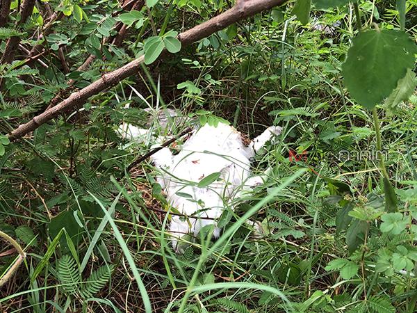 ไม่พบเพิ่มกระต่ายถูกทิ้งในป่าแหลมสนอ่อน ยังไร้หน่วยงานเข้าติดตามล่าตัวคนทิ้ง