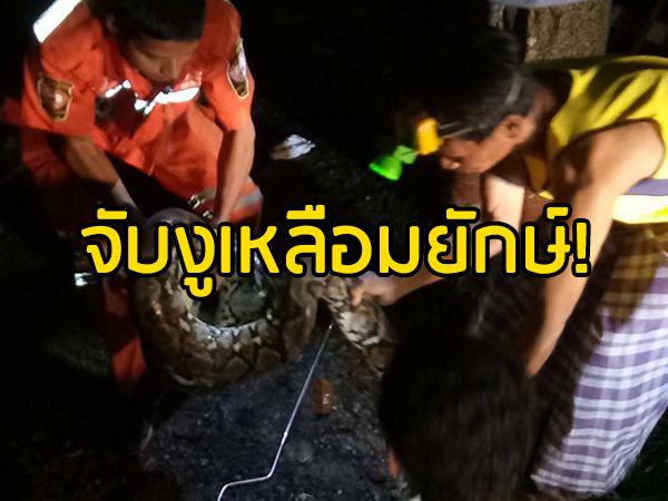 กู้ภัยลุยจับงูเหลือมยาวเกือบ 7 เมตร พบเลื้อยบุกหลังบ้านกลางดึก