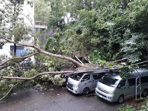 ฝนหนักลมแรงทำต้นไม้ใหญ่ล้มทับหลังคาโรงรถศาลากลางจันทบุรีพังยับพร้อมรถ  4 คัน แถมอุบัติเหตุดับ 1