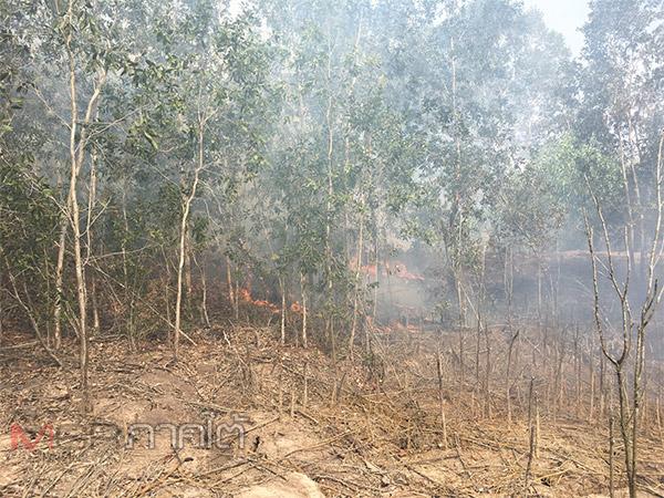 ไฟมาป่าหมด! เกิดเหตุไฟไหม้ป่าพรุควนเคร็งเมืองคอนลุกลามแล้วกว่า 1,200 ไร่