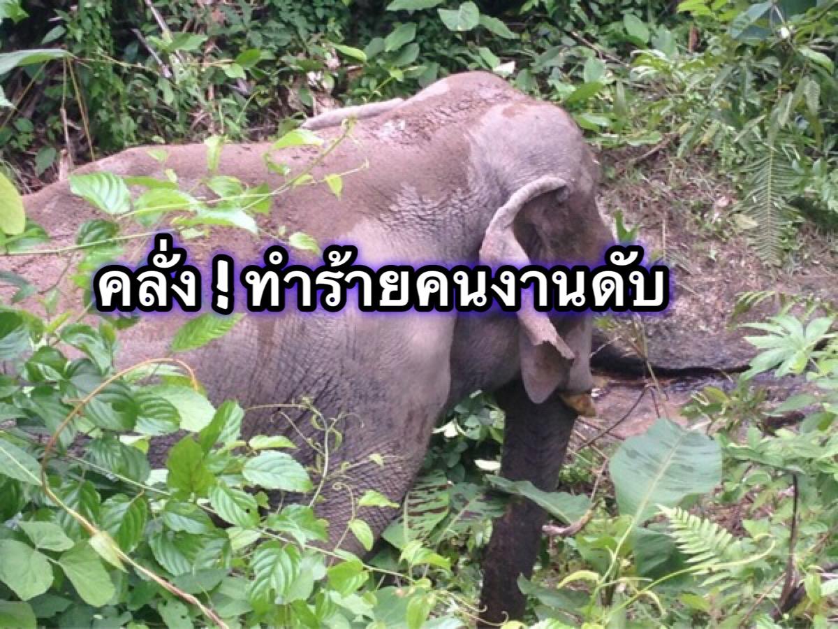 ช้างคลั่ง ! ทำร้ายคนงานดับอนาถ คาดอากาศร้อนเครียด
