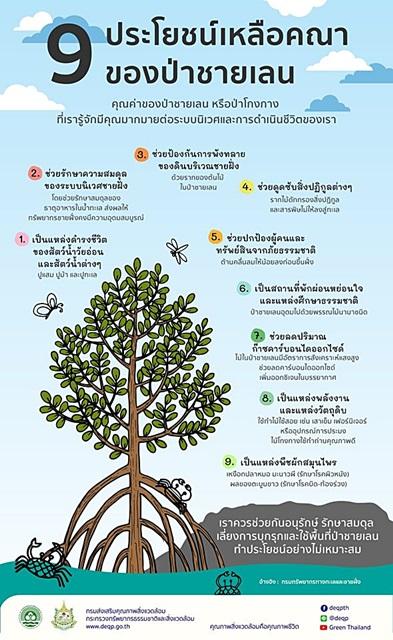 9 ประโยชน์เหลือล้นของป่าชายเลน