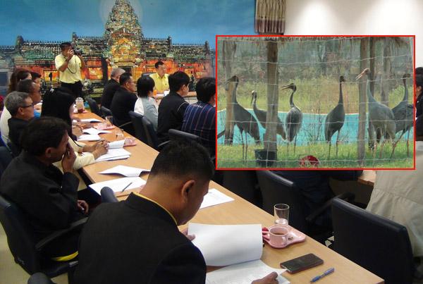 """บุรีรัมย์จ่อเปิดศูนย์อนุรักษ์ """"นกกระเรียนพันธุ์ไทย"""" เคยสูญพันธุ์ในอดีต พร้อมดันเป็นแหล่งท่องเที่ยว"""