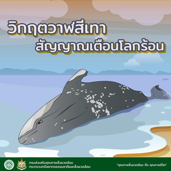 75 ชีวิต! วาฬสีเทาที่ล้มตาย  สัญญาณร้ายโลกร้อนหรือไม่!!
