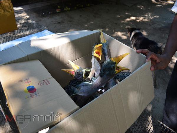 กรมป่าไม้เตือนประชาชนห้ามซื้อสัตว์คุ้มครอง หลังพบขบวนการจับนกเงือกที่นราธิวาส