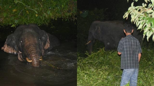 กรมอุทยานฯ เผยช้างป่าใช้กลยุทธ์ใหม่ ลอยตัวในน้ำ หวังเข้ากินผลไม้ในสวนชาวบ้าน