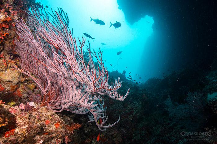 ท่องสวรรค์แห่งท้องทะเล กับ 8 สิ่งมหัศจรรย์แห่งมัลดีฟส์