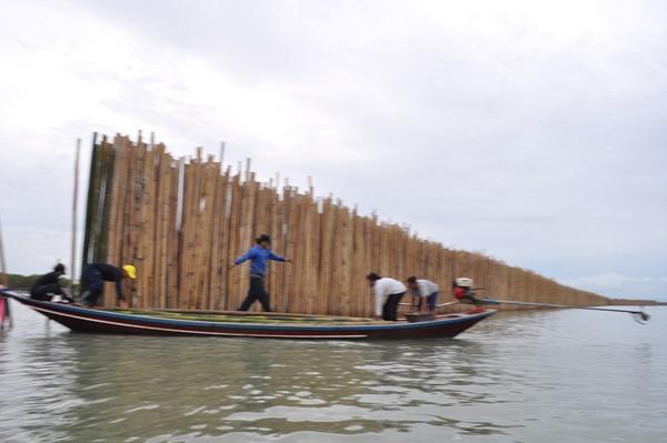 สำเร็จแล้ว ! มาตรการฟื้นฟูทรัพยากรทางทะเลทำป่าเลนเพิ่ม แผ่นดินงอก พร้อมเดินหน้าทำต่อ