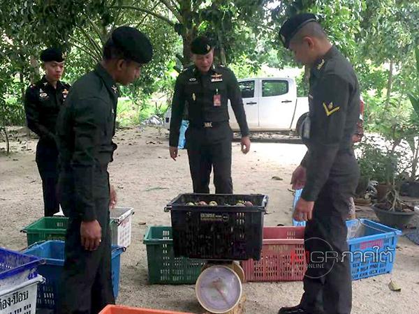 ทภ.4 กระจายหน่วยทหารเข้าซื้อมังคุดจากชาวสวนช่วยกระตุ้นราคาตลาดรับซื้อ