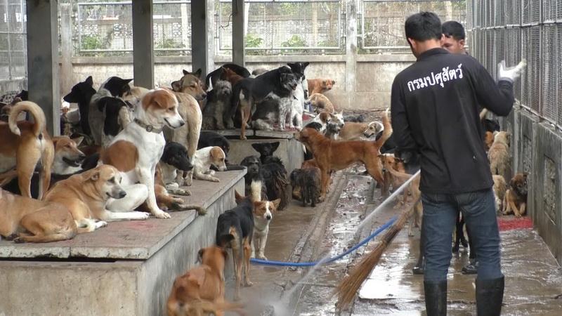 ด่านกักสัตว์นครพนมหาผู้อุปการะหมา-แมว หลังกักพ้นขีดพิษสุนัขบ้าระบาด