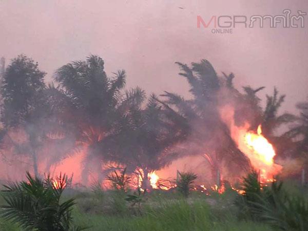 เมืองคอนประกาศพื้นที่ภัยพิบัติป่าพรุควนเคร็งแล้วหลังส่งผลกระทบสุขภาพ