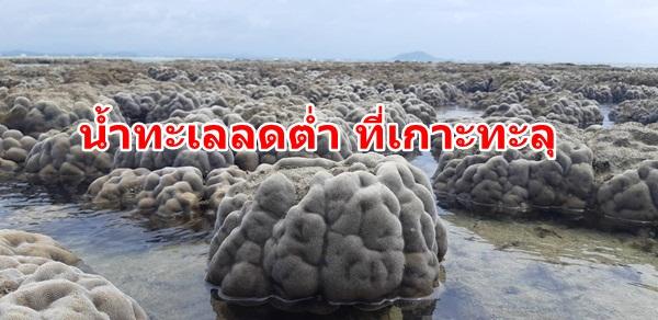 ประจวบฯน้ำทะเลลดต่ำ ส่งผลปะการังเกาะทะลุโผล่ ครั้งที่สองในรอบปี