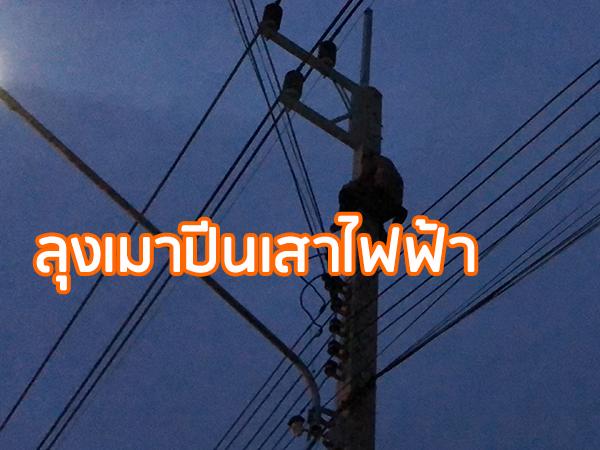 ระทึกลุงดื่มเหล้าจนเมาปีนขึ้นเสาไฟฟ้า หลานชายเสี่ยงตายขึ้นไปช่วยลงมาปลอดภัย