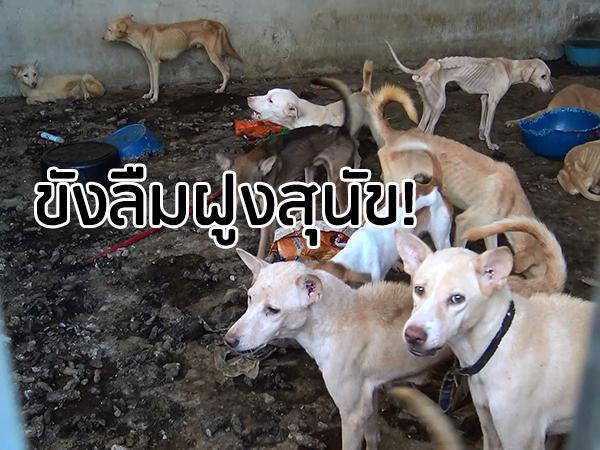 สลดใจ! ฝูงสุนัขกว่า 20 ตัว ถูกขังลืมในบ้านที่สงขลา สภาพผอมโซมีแต่หนังหุ้มกระดูก
