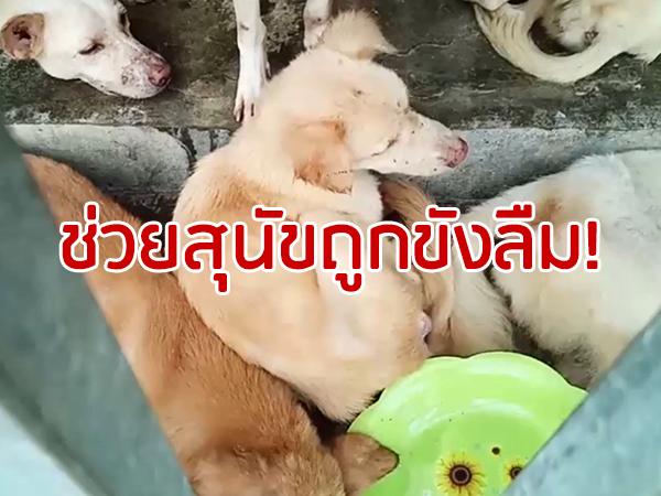 หน่วยงานลงพื้นที่ช่วยสุนัขถูกขังลืมกว่า 20 ตัว พบร่องรอยทำความสะอาดคอกกลางดึก