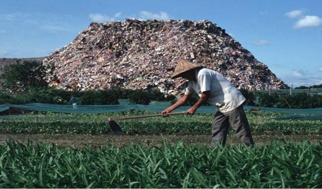 เกษตรกรสามารถทำการปลูกพืชผักได้บนผืนดินที่ครั้งหนึ่งเคยเป็นกองขยะ
