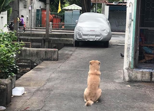 สะเทือนใจ! เจ้าของย้ายบ้านแต่ไม่เอาสุนัขไปด้วย ปล่อยให้เฝ้ารอ-ไม่ยอมกินอาหาร