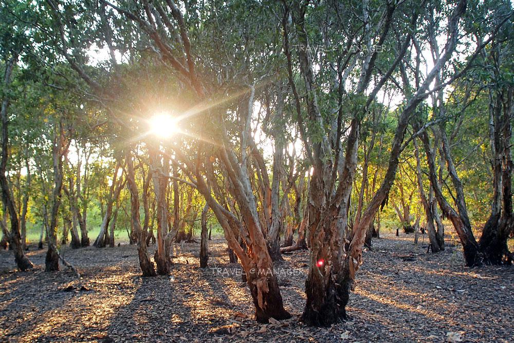 กลุ่มระบบนิเวศป่าไม้เสม็ดขาวแห่งระยอง