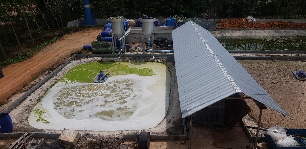 บ่อบำบัดน้ำเสียจากโรงงาน