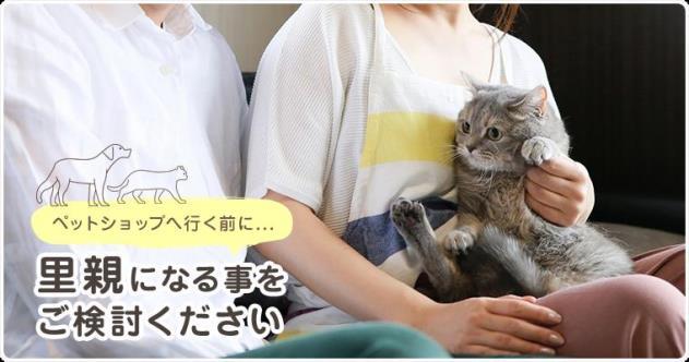 """""""โปรดพิจารณารับเลี้ยงสัตว์ไร้บ้านก่อนจะไปร้านขายสัตว์เลี้ยง """"  ภาพจาก https://satoya-boshu.net/"""