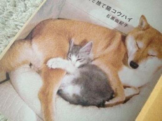 ลูกแมวที่มีคนเก็บมาเลี้ยง มาถึงบ้านวันแรกก็โผเข้าหาไออุ่นจากสุนัขที่เจ้าของเลี้ยงไว้