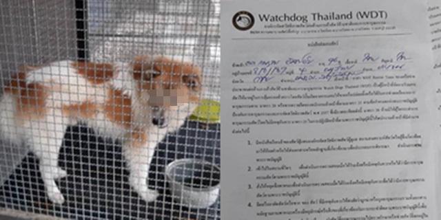 สลดใจ! สุนัขบางแก้วกัดเจ้าของเสียชีวิต ล่าสุด จนท. WDT ปรับพฤติกรรมเพื่อหาบ้านอุปการะต่อ