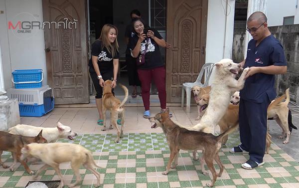 ผ่าน 2 สัปดาห์ชีวิตเปลี่ยน 30 สุนัขถูกขังลืมในบ้านพักที่สงขลา เริ่มมีเนื้อหนังสุขภาพดีขึ้น