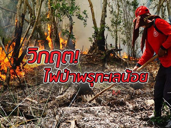 วิกฤตไฟป่าพรุทะเลน้อยขยายวง เจอลักลอบเผาอีกในเขตป่าชุ่มน้ำโลก