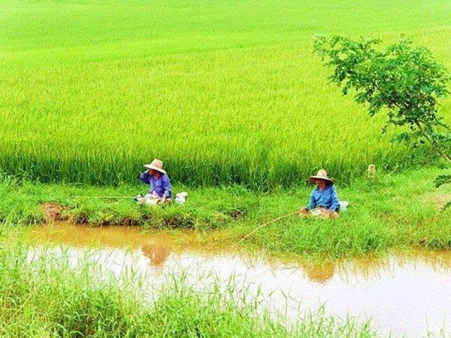"""จีน-อินโดนีเซีย เร่งเพิ่มพื้นที่เลื้ยงปลาในนาข้าว  ย้อนแย้งวิถีไทย! """"ในน้ำไม่มีปลา ในนาข้าวมีสารพัดสารพิษ"""""""