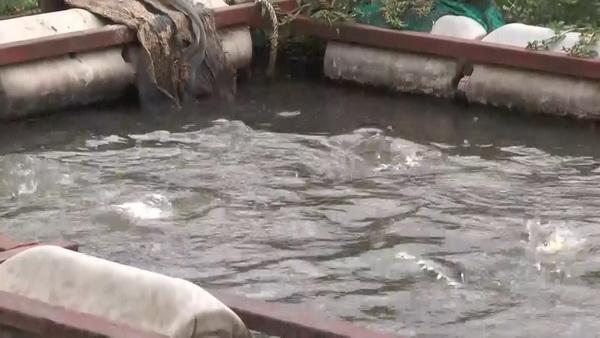 เฝ้าระวัง ! 2 เขื่อนใหญ่ลดปล่อยน้ำเตือนชาวแพ-ชาวประมงสะแกกรังเร่งจับปลาขายงดเลี้ยงใหม่