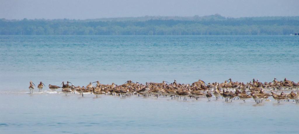 เขตห้ามล่าฯ ลิบง ว่าที่มรดกแห่งอาเซียนที่เป็นที่อยู่ของนกหลากหลายชนิด