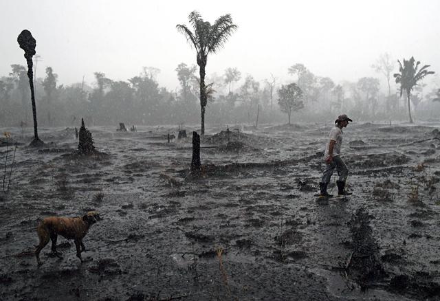 เกษตรกรชาวบราซิล เฮลิโอ ลอมบาร์โด โด ซานโตส และสุนัขตัวหนึ่งเดินผ่านพื้นที่ไฟไหม้ของป่าฝนแอมะซอน