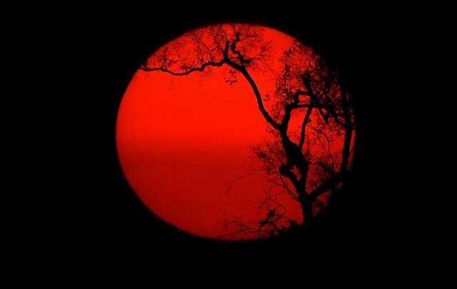พระอาทิตย์ขึ้นหลังต้นไม้ไหม้เกรียมต้นหนึ่งในป่าฝนแอมะซอน ทางใต้ของเมืองปอร์โตเวลโฮ