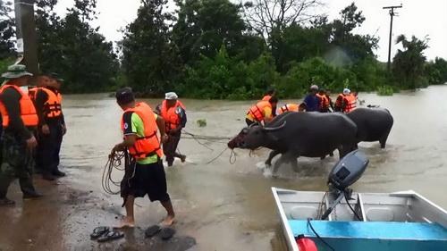 ทหารช่วยขนย้ายสัตว์เลี้ยง และชาวบ้านหนีน้ำลำเซบกไหลท่วม
