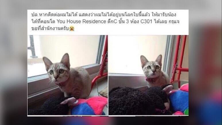 หนุ่มโพสต์ลาโลก! วอนหาคนดูแลแมวรัก ระบุไม่สามารถทนเลี้ยงต่อ เนื่องจากทำให้คิดถึงคนรัก