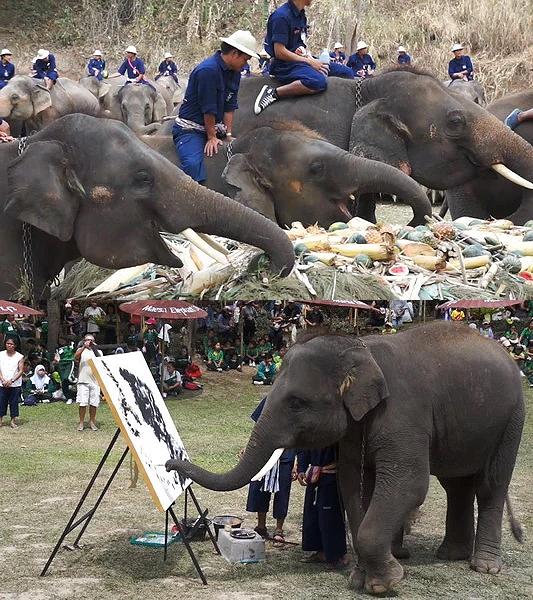 ปางช้างแม่สา จ.เชียงใหม่ รางวัลกินรีปี 62 สาขาแหล่งท่องเที่ยวเพื่อการผจญภัย